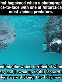 Photographer Meets a Leopard Seal