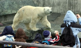 Polar Bear Anton Dies After Eating Visitor's Stuff