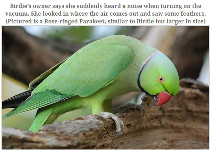 A Parakeet Survived After Being Sucked Into a Vacuum