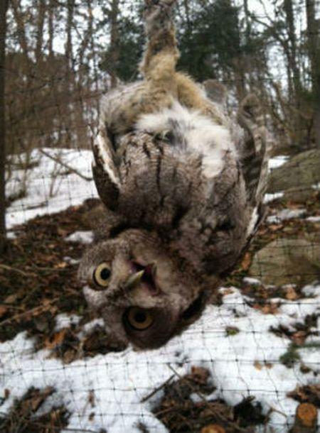 Saving an Owl