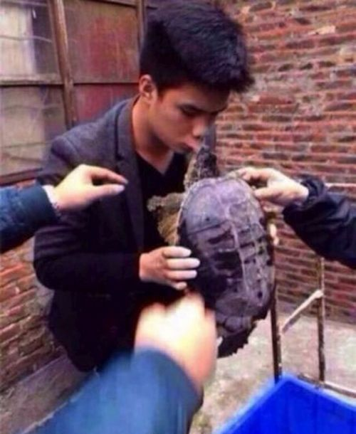 Why You Should Never Kiss a Turtle