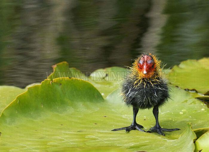 Wetland Wildlife