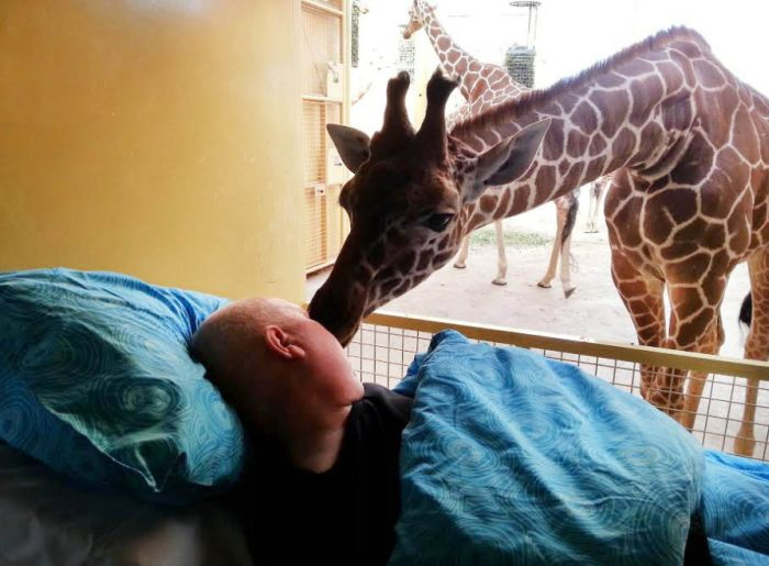 Giraffe Says Goodbye to Dutch Zookeeper Dying of Cancer