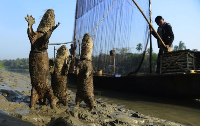 Fishing with Otters