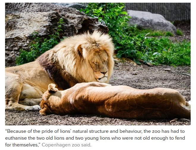 The Copenhagen Zoo Continues to Slaughter Animals