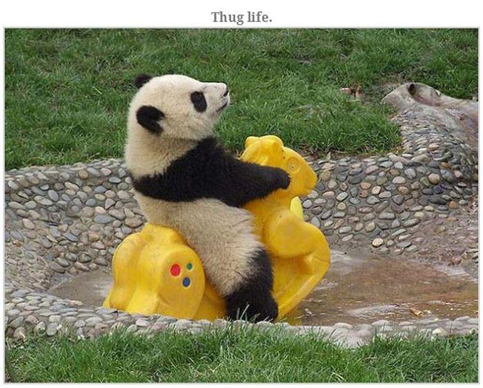 Bears Doing Weird Things