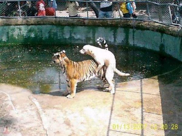 Pervert Animals