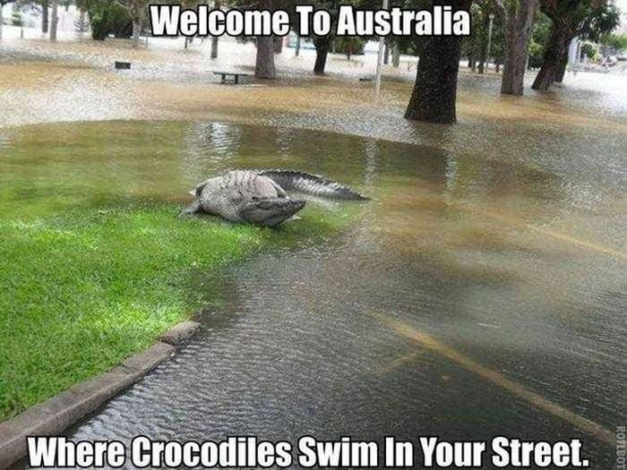Scary Creatures Living in Australia