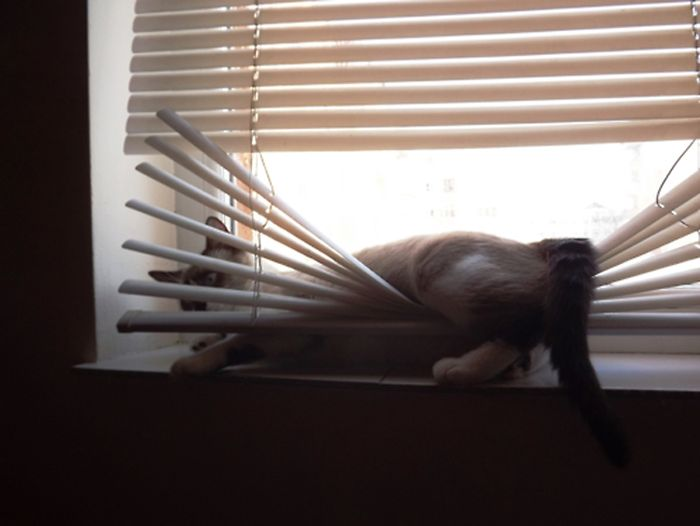 Cats Destroying Things