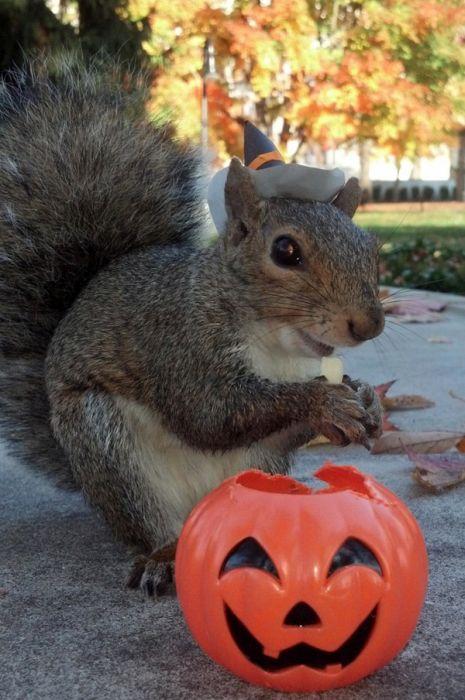 Pet Squirrel