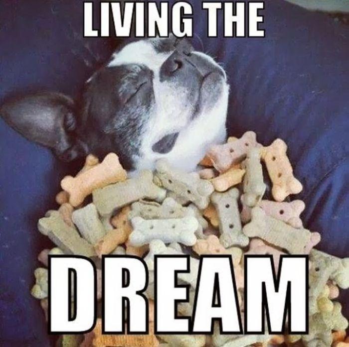 People Living Their Dreams