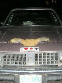 Cars with Horns