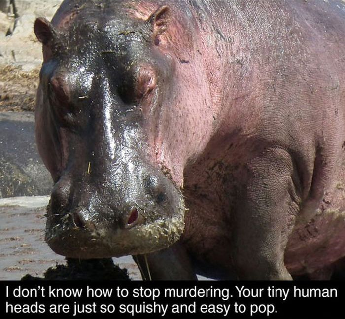 Fun Facts About Hippos
