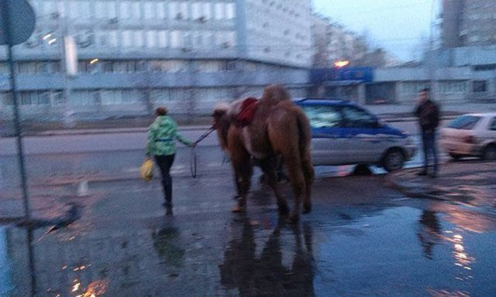 Only in Russia, part 15