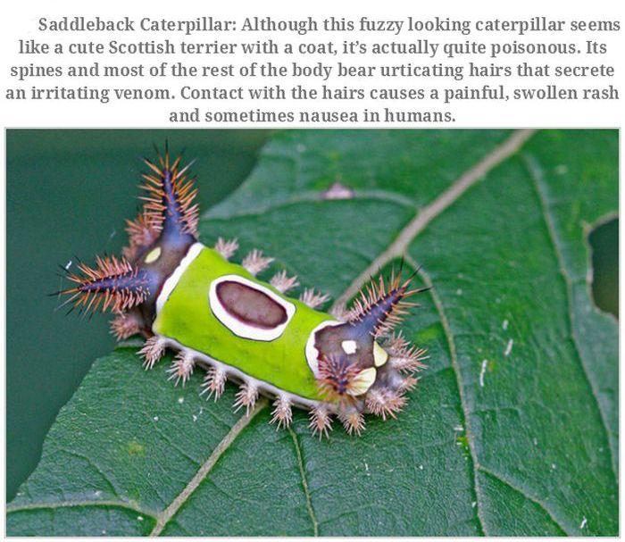 Unusual Animals