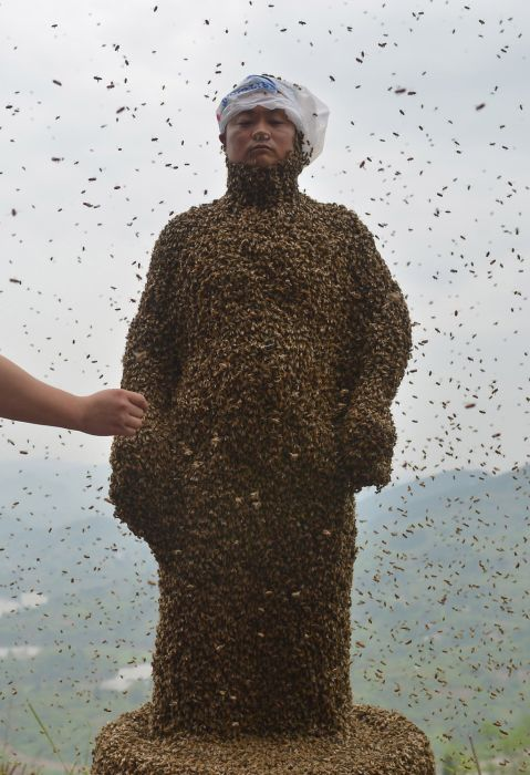 460,000 Bees
