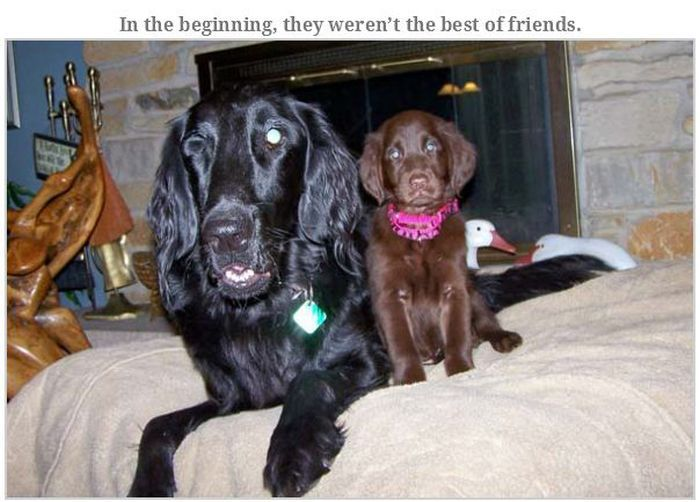 Blind Family Dog and Their New Puppy