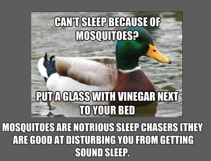 Facts About Mosquitos