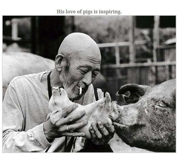 Farmer Who Loves His Pigs