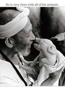 Farmer Who Loves His Pigs