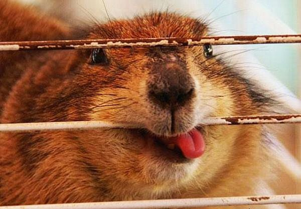 Funny animals, lost control of their tongue