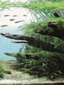 Beautiful Aquariums