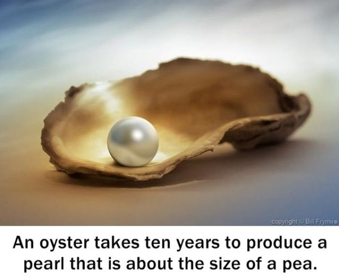 Interesting Facts, part 12