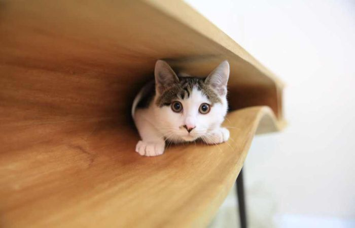 This Table Has Built In Tunnels For A Cat