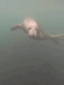 These Playful Seals Want To Be Your Friend
