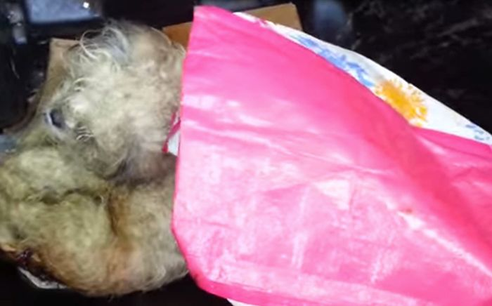 This Dog Was Thrown In A Trash Can, See What Happened To It After