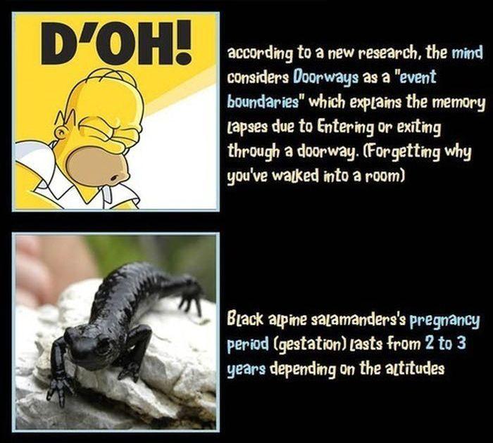 Unbelievable But True Facts Part 7 Fun
