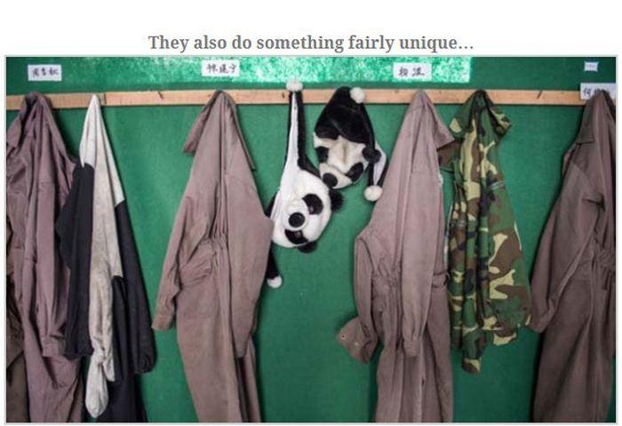 People Dressed As Pandas Living With Pandas