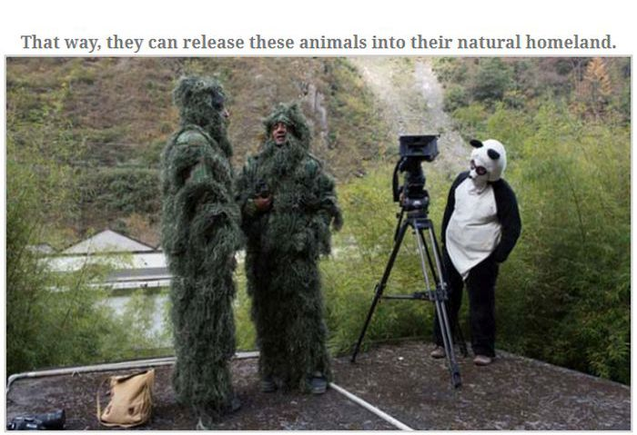 People Dressed As Pandas Living With Pandas