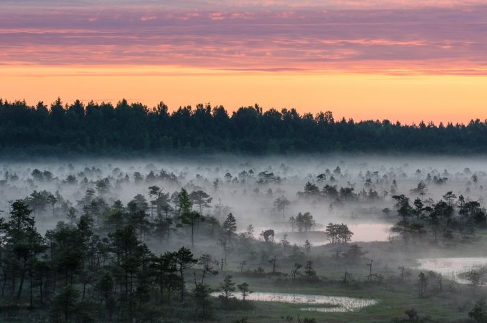 See The Amazing Outdoors Of Estonia