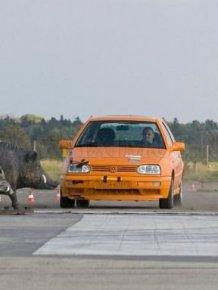 Crash Test: Car vs. Boars