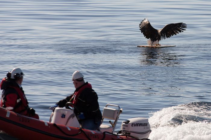 These People Saved This Eagle From Drowning