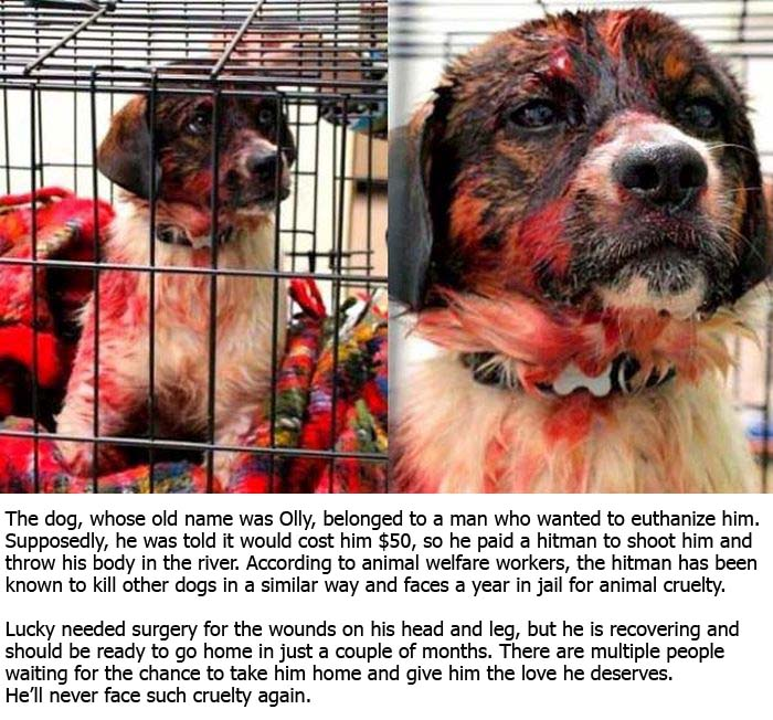A Hitman Tried To Kill This Dog And Failed