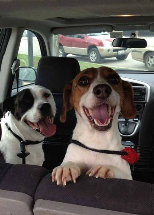 These Rescue Dogs Go From Sad To Happy Real Quick