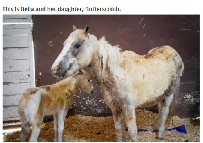 This Pony Proves There's Nothing Like A Mother's Love