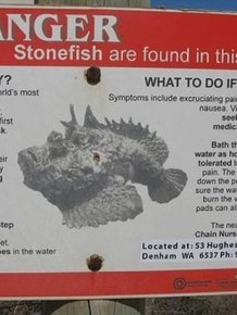Watch Out For Stonefish They Come Out Of Nowhere