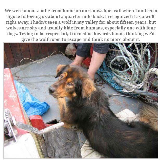 Man Rememebers His Dog That Passed Away Animals