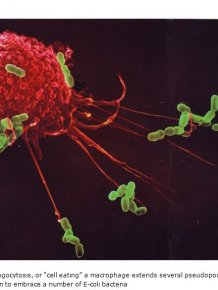 There's A War Going On Within Your Immune System