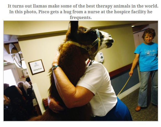The Most Heroic Animals You're Ever Going To See