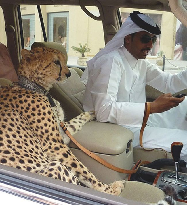 The Ridiculous Lives Of Rich People In Dubai
