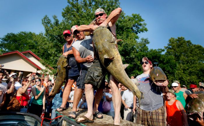 Would You Noodle These Giant Catfish?