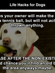 Hilarious Life Hacks For Dogs