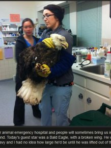 The Animal Hospital Never Expected This Guest To Arrive