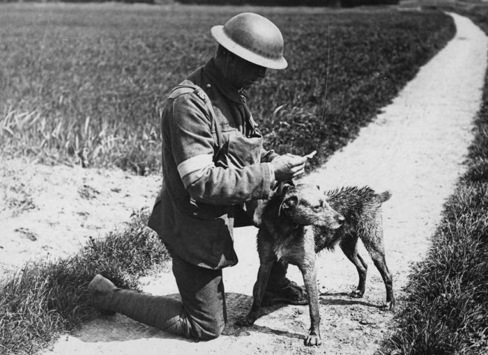 The Animals That Helped Fight World War I