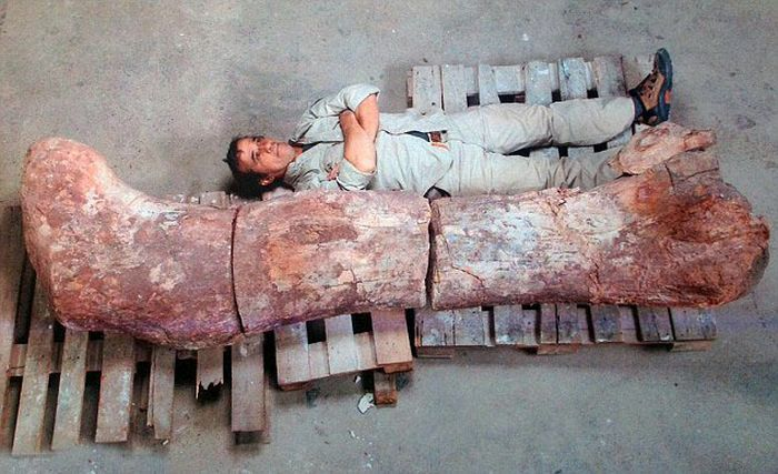 Largest Dinosaur Ever Gets Discovered In Argentina