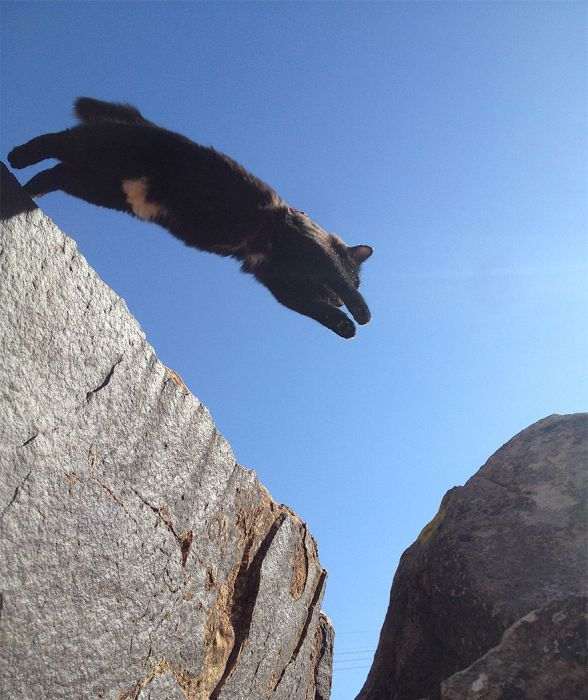 This Cat Climbs Mountains Like A Boss
